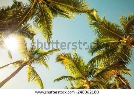 Coconut palm trees and shining sun over bright sky background. Vintage style. Toned photo with instagram filter