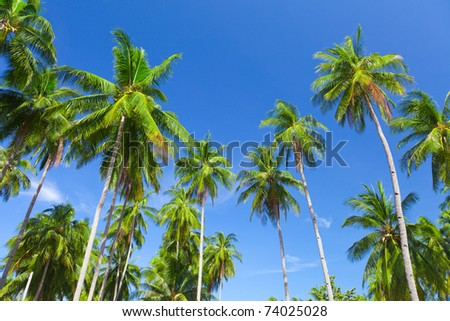 coconut palm trees and sky #74025028