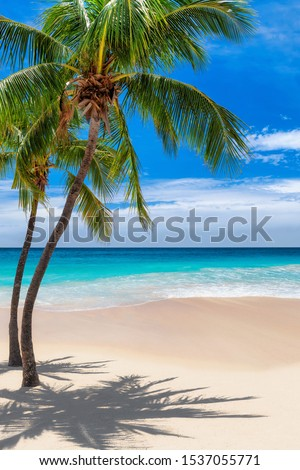 Coconut palm trees and turquoise sea in Jamaica Caribbean beach. Summer vacation and tropical beach concept.