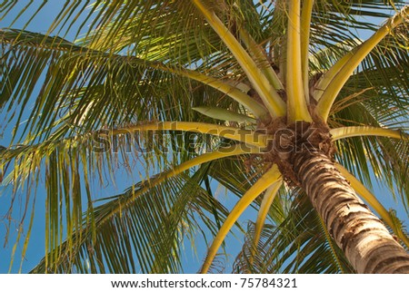 coconut palm trees at the nice blue sky day