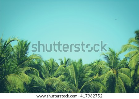 Coconut palm trees, beautiful tropical background, vintage filter #417962752