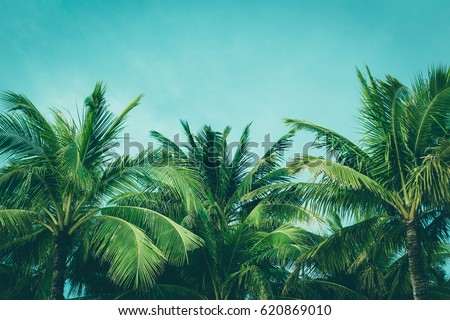Coconut palm trees, beautiful tropical background, vintage filter #620869010