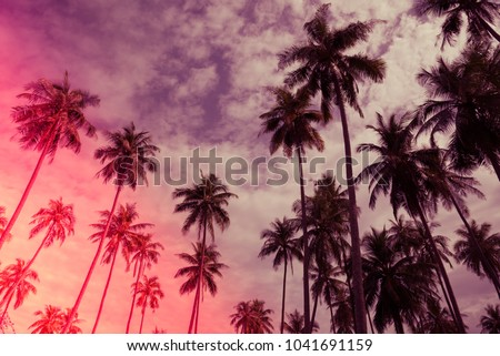 Coconut palm trees farm in Koh Mak island Thailand - Light leak effect summer holiday