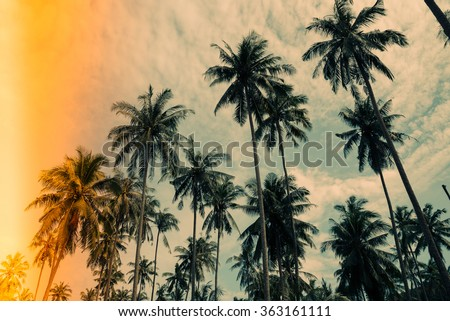 coconut palm trees farm in koh...