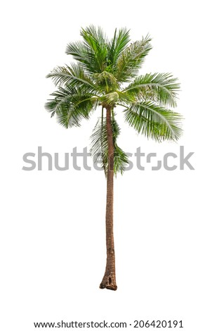 Coconut palm trees isolated on a white background - Shutterstock ID 206420191