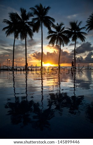 Coconut palm trees line an infinity pool at a resort in Palau, Micronesia.  Palau is a famous destination for divers, snorkelers, and kayakers.