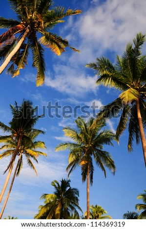 Coconut palm trees near the sea