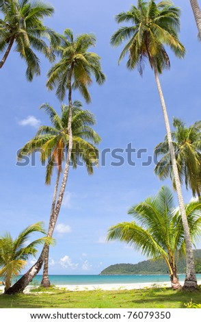 Coconut palm trees on green grass near the sea