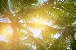 Coconut palm trees on the beach ,summer concept background, travel concept