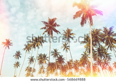 Coconut palm trees on tropical beach vintage nostalgic film color filter stylized with light leaks