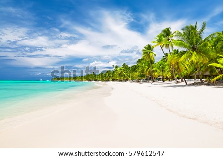 Coconut Palm trees on white sandy beach in Caribbean sea, Saona island. Dominican Republic #579612547
