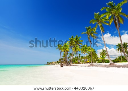 Coconut Palm trees on white sandy beach in Punta Cana, Dominican Republic #448020367