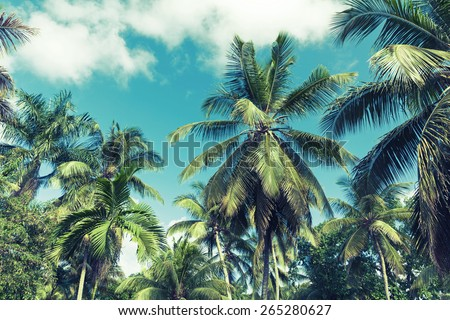 Coconut palm trees over cloudy sky background. Vintage style. Photo with instagram style blue toned filter effect