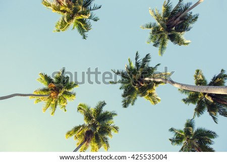 Coconut palms against the blue sky.  Low Angle View. Toned image #425535004