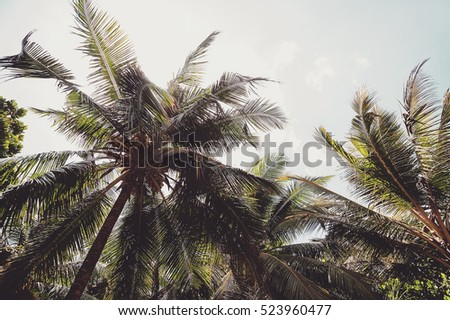 coconut palms and blue cloudy...
