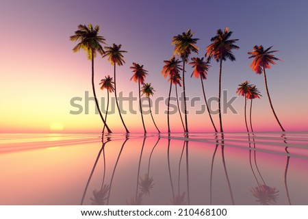 Stock Photo coconut palms at pink tropical sunset over calm sea