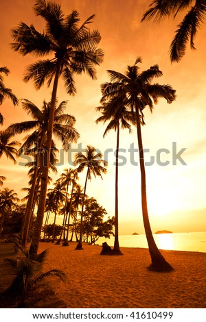 Coconut palms on sand beach in tropic on sunset. Thailand, Koh Chang, Kai Bae beach - stock photo
