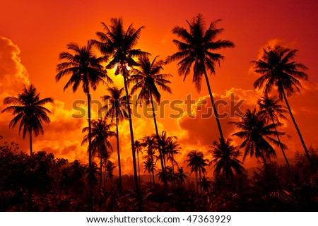Coconut palms on sand beach in tropic on sunset. Thailand, Koh Chang, Klong Prao beach