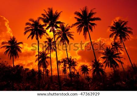 Coconut palms on sand beach in tropic on sunset. Thailand, Koh Chang, Klong Prao beach