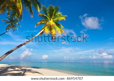 Coconut palms on the beach. Lagoon.