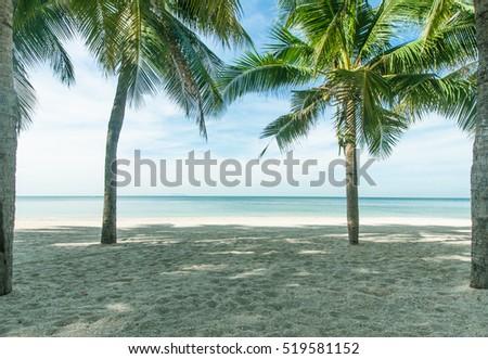 Coconut palms on the beach. The bright blue sky #519581152
