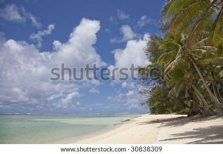 Coconut Palms on Tropical Beach - Cook Islands, Polynesia