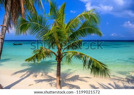 Coconut palms on tropical Haad Yao beach, Koh Phangan island, Suratthani, Thailand #1199021572