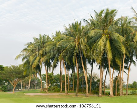 coconut palms tree on the green field at golf club