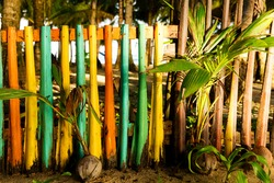 Coconut seedlings with colourful coconut fern fence at sunrise