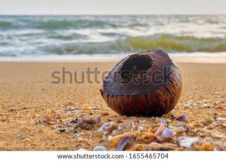 Coconut shell with shells on the beach