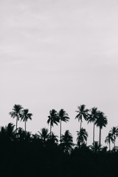 coconut silhouette
