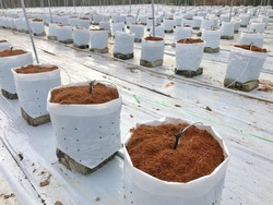 Coconut soil in bag for fertigation farm , Fertigation is related to chemigation, the injection of chemicals into an irrigation system.