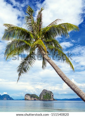 Coconut tree and beach at Ngai Island, an island in the Andaman Sea, Thailand