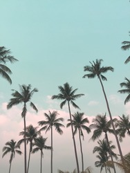 Coconut tree and blue sky at Koh Chang Thailand