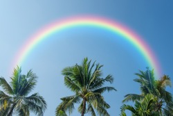 Coconut tree and blue sky with rainbow