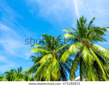 Coconut tree and the bright blue sky #675280831