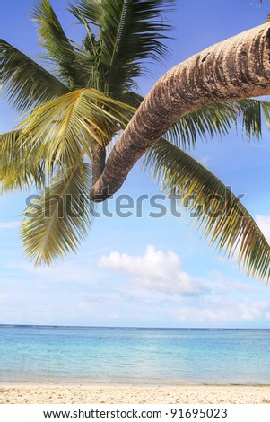 Coconut tree at beach