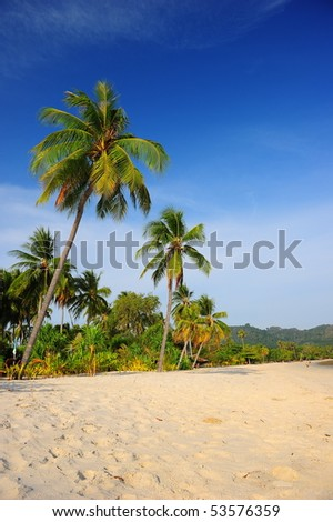 coconut tree at the beach #53576359