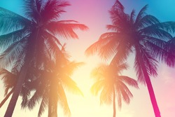 coconut tree at tropical coast,made with Vintage Tones,Warm tones