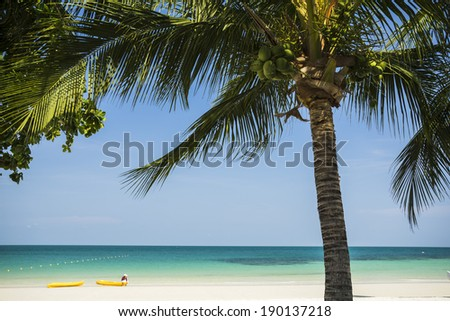 coconut tree, beach in Thailand