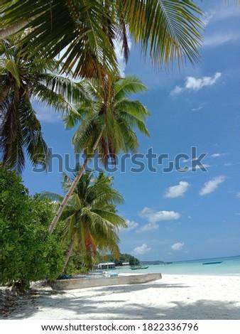 Coconut tree, ngurbloat beach, kei island, moluccas Stockfoto ©