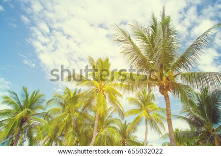 Coconut tree on a tropical white sand beach in the thailand #655032022