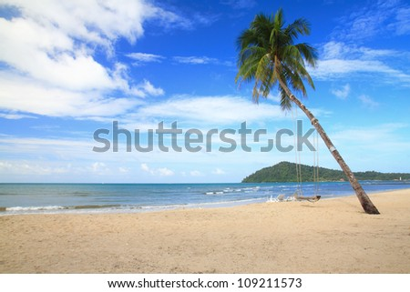 coconut tree on a white sand