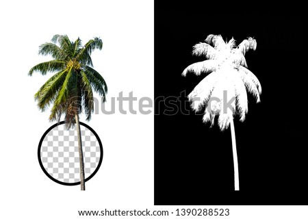 Coconut Tree on transparent background with clipping path and alpha channel on black background. Can use in architectural design, Decoration work, Used with natural articles both on print and website. #1390288523