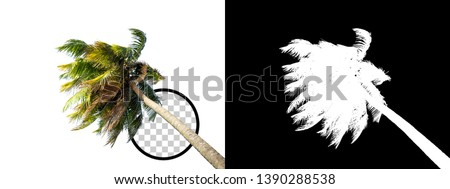 Coconut Tree on transparent background with clipping path and alpha channel on black background. Can use in architectural design, Decoration work, Used with natural articles both on print and website. #1390288538