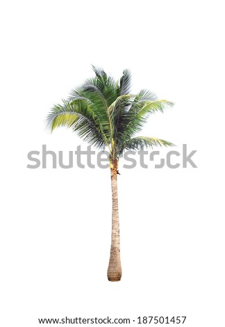 Coconut tree on white background - Shutterstock ID 187501457