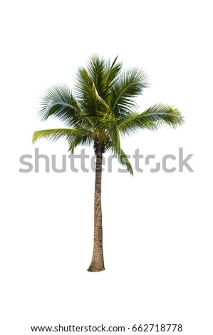 Coconut tree on white background   - Shutterstock ID 662718778