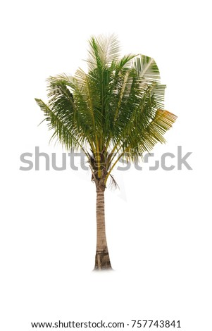 Coconut tree on white background   - Shutterstock ID 757743841