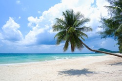 Coconut tree or palm tree at Thung Wua Laen Beach in Chomphon province Thailand, viewpoint of tropical beach seaside and blue sky
