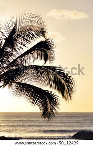 Coconut Tree Silhouette in Hawaii